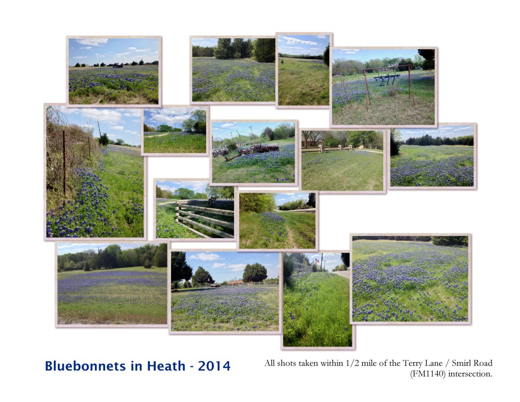 Shannon's Farms Bluebonnets