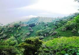 costa rico rain forest